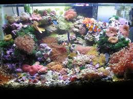 10 gallon reef tank