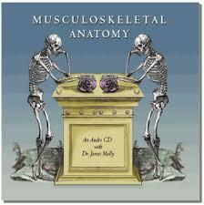 musculoskeletal anatomy