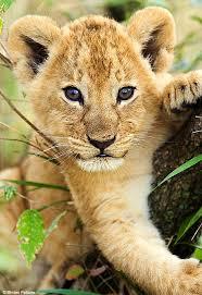 animals cubs