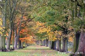 autumn leaves pictures