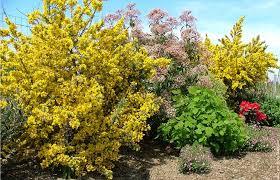 http://t0.gstatic.com/images?q=tbn:Wslo-_BS9gw1bM:http://www.fond-ecran-image.com/galerie-membre,fleur-forsythia,jardin-1.jpg