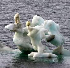 bears photo