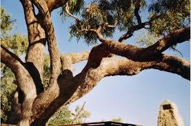 dig tree