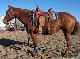 comfortable saddles