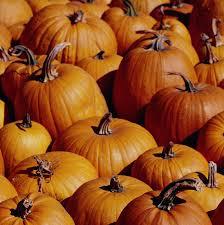 pumpkins patches