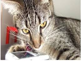 cat cell phone