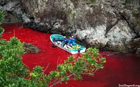 japan killing dolphins