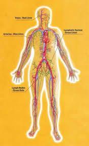 lymph system drainage