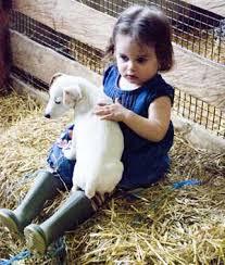 farm pet