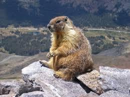 marmot canada