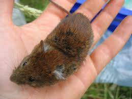 pictures of small mammals