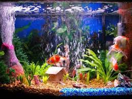 aquariums decorations