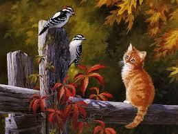 cats bird