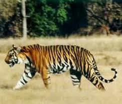 wild animals india