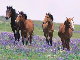 horses screensavers