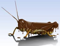 chocolate covered insect