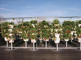 agricultura hidroponica