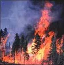forest fire picture