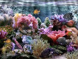 coral reef tanks