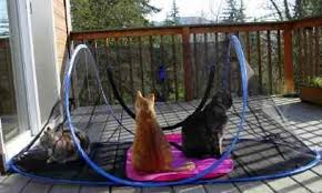 outdoor cat pen