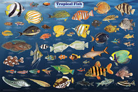 all species of fish