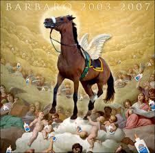 barbaro the horse