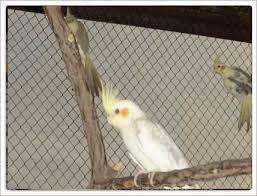 cockateil cage