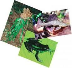 flora y fauna de campeche