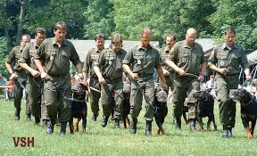 rottweiler guard dog