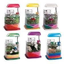 aquariums betta