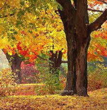 عکس پاییز برگ ریزان