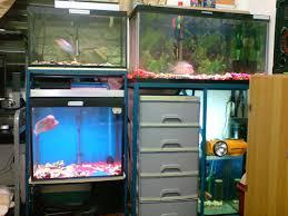 pako fish
