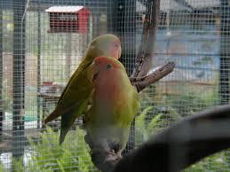 lovebird aviaries