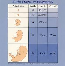 1st trimester pregnancy photos