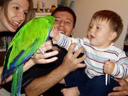 parrot pets