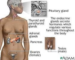 glands in the body