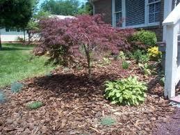 japanese maple bushes