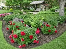 garden peony