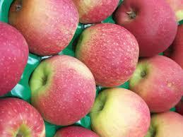 pink ladies apples