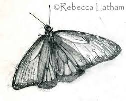 butterflies sketches