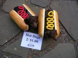 hot dog costume for dog