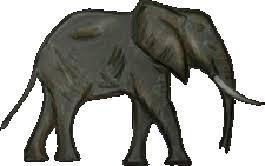 elephant body