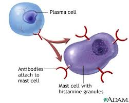 cell immune system