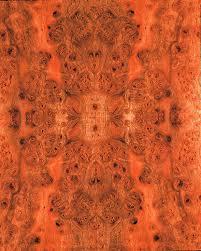 carpathian elm burl