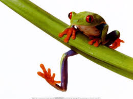 pictures of a tree frog