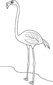 drawings of flamingos