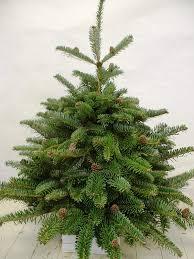fir tree photos