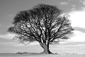 black and white tree pics
