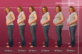 pregnancy in woman