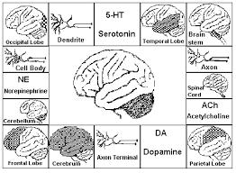 brain board games